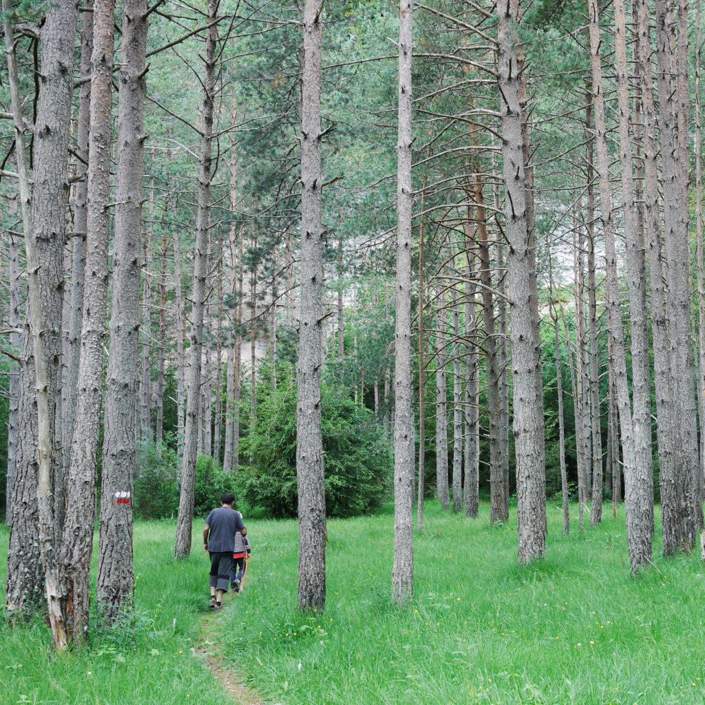 Camino de pinos
